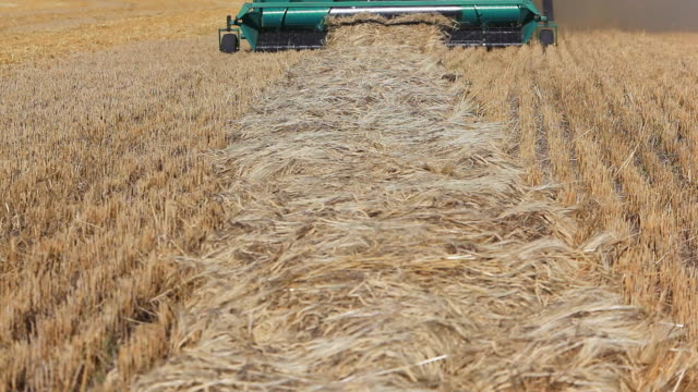 Close-up of combine harvester harvesting wheat field video