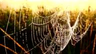 Close-up of dew water droplets on spider web video