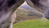 Closeup of donkey face video
