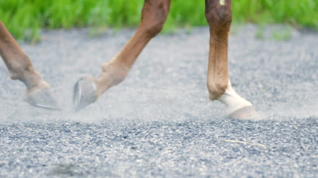 Close-up of horse hooves walking on sandy ground video