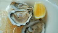 Close-up of oyster with lemon on an ice plate video