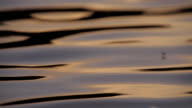 Closeup Of River Water At Sunset video