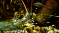 Close-up Of Shrimp In Fish Tank video