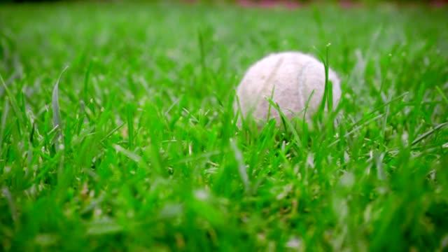 Closeup of tennis ball on green grass. Close up of white tennis ball grass video