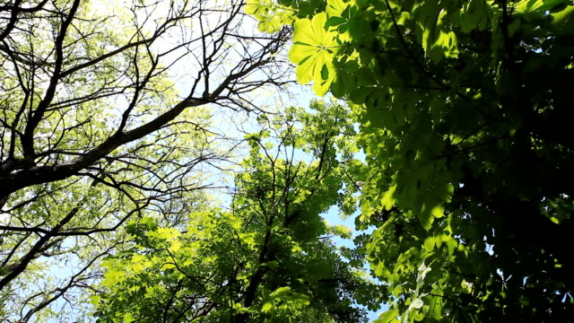 Close-up of Tree Leaves video