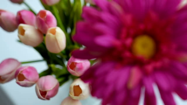 Close-up of tulips and gerbera flowers video