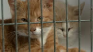 Close-up of two kitten in cage video