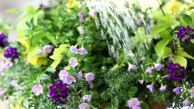 Closeup of watering can video