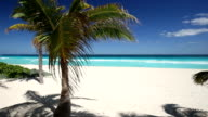 Closeup on coconut palm tree foliage at caribbean shore video