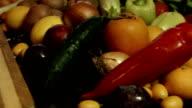 Closeup on housewife cutting cucumber video