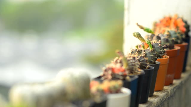 close-up panning : cactus is on the edge of building video