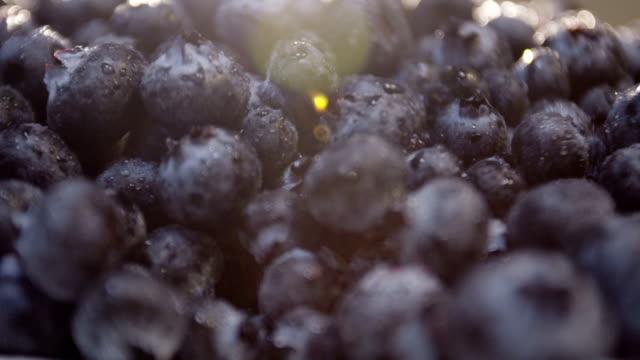 closeup panning shot of farm fresh blueberries ready to serve video
