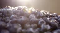 Closeup shot of fresh blueberries at brunch. video
