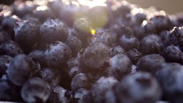 Closeup shot of freshly picked organic blueberries video
