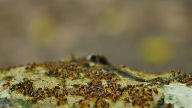 Close-up termites parade on Tree. video