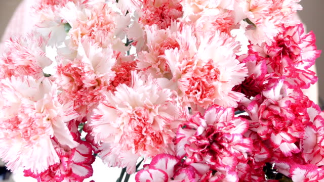 close-up, view from above, Flowers, bouquet, rotation, floral composition consists of Gently light pink turkish Carnation video