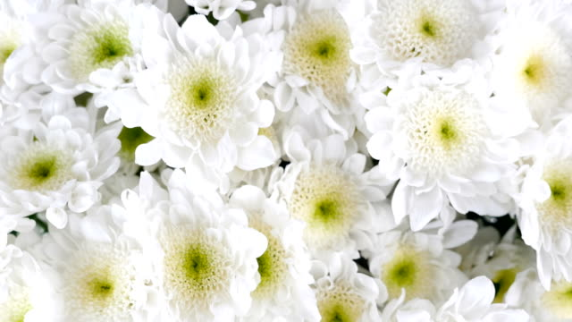 close-up, view from above, Flowers, bouquet, rotation, floral composition consists of white Chrysanthemum Chamomile bacardi video