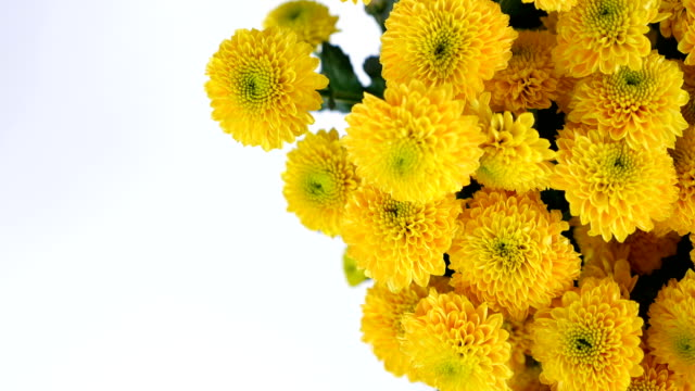 close-up, view from above, Flowers, bouquet, rotation on white background, floral composition consists of yellow Chrysanthemum santini video