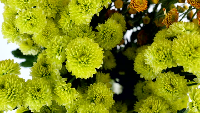 close-up, view from above, Flowers, bouquet, rotation on white background, floral composition consists of green and orange Santini video