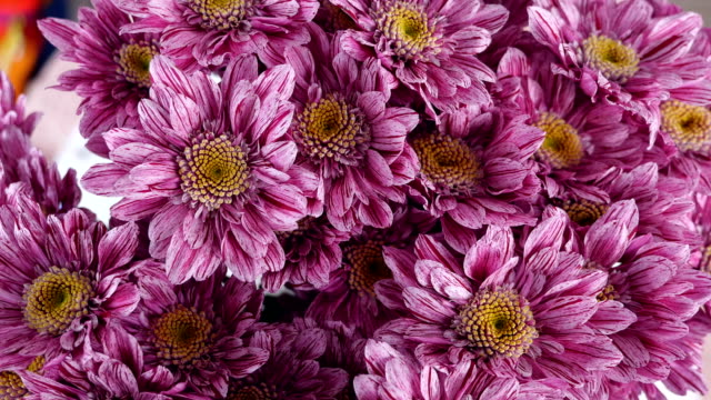 close-up, view from above, Flowers, bouquet, rotation on white background, floral composition consists of purple Chrysanthemum saba video
