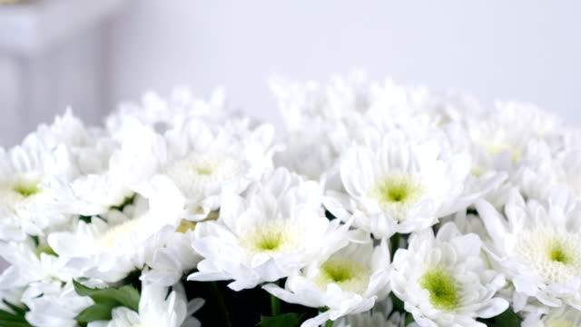 close-up, view from above, lowers, bouquet, rotation, floral composition consists of white Chrysanthemum Chamomile bacardi video
