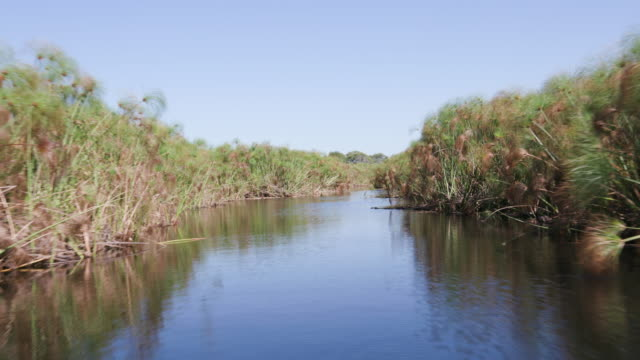 Close-up POV view of boat going through a channel in the Okavango Delta video