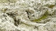 ORGANIC MATTER : close-up, vortex (LOOP) video