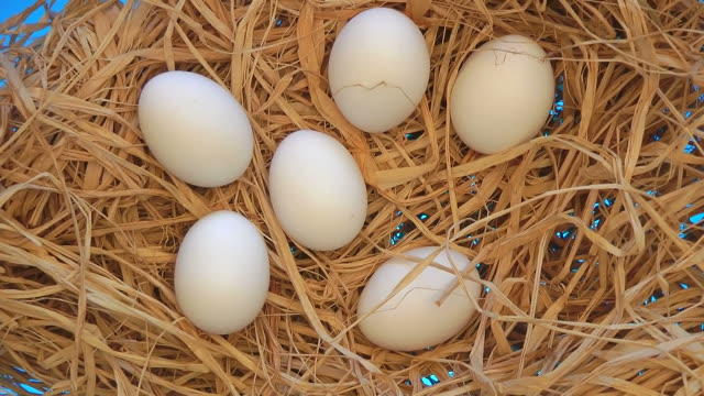 Close-up white chicken eggs on a bed of straw video