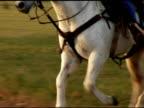 Closeup White Horse Gallopping video