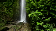 Cloud forest waterfall video