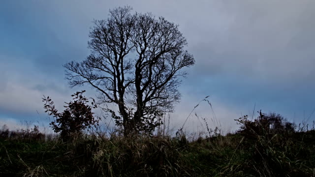 clouds moving over lonely tree in timelapse video