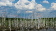 clouds over birches in the pond video