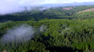 Clouds over fir trees in Oregon forest video