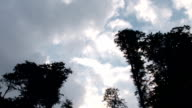 Clouds over Tall Trees video