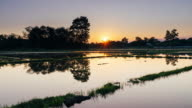 Clouds sunset and water reflection in rice field Day to sunset Time-lapse. video