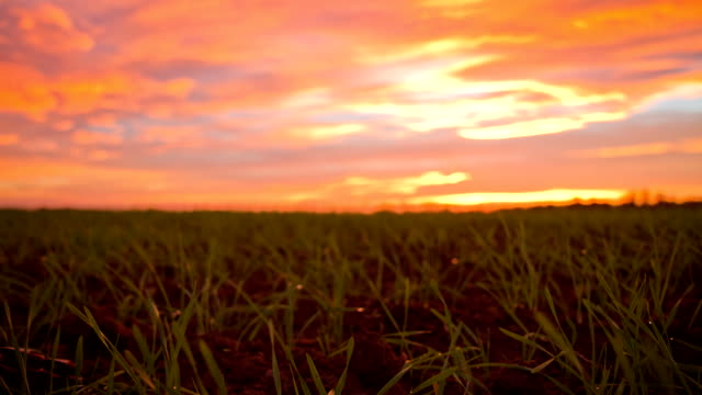 HD TIME-LAPSE: Cloudscape Over A Meadow video