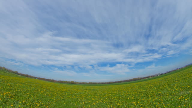 HD TIME LAPSE: Cloudscape Over Field Of Dandelions video