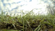 HD TIME-LAPSE: Cloudscape Over Spring Grass video