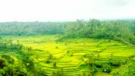 T/L Cloudscape Over Terraced Rice Fields video