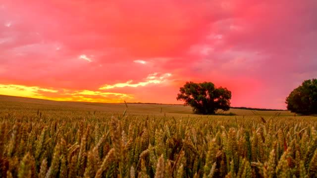 T/L Cloudscape Over Wheat Field At Sunrise video