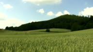 Cloudy Field & Forest - 1080 video