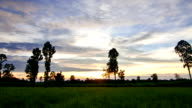 Cloudy sky during sunset to twilight over dipterocarp trees timelapse video