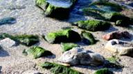 Coast and stones. video