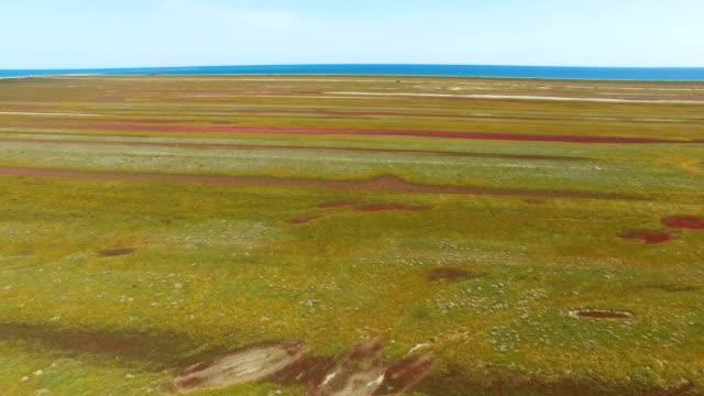 Coastal salt marshes, aerial video video