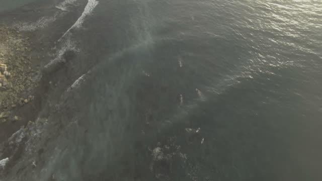 Coastal surfer in sunset aerials video