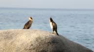 Coastal with cormorants (Spain,Costa Brava) video