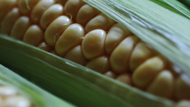 Cob of young corn wrapped in green leaves. video