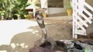 SLOW MOTION: Cobra charming in Sri Lanka video