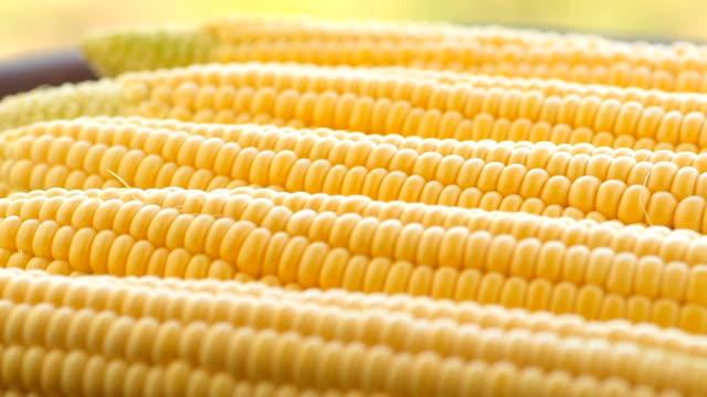 cobs of crude corn video