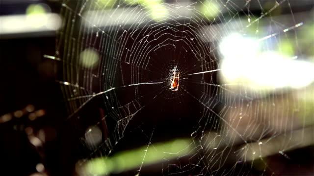 HD: Cobweb and Spider video